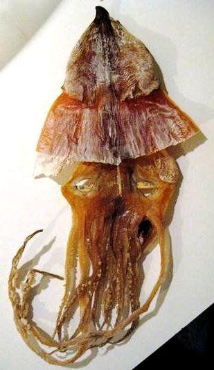 Dried Shredded Squid, (Kurutulmuş Kalamar)